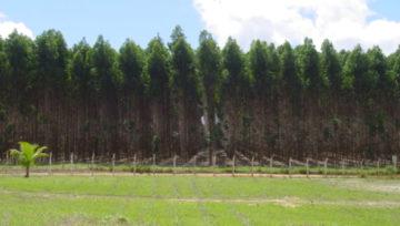 Sustentabilidade Energética e O benefício das Florestas Plantadas